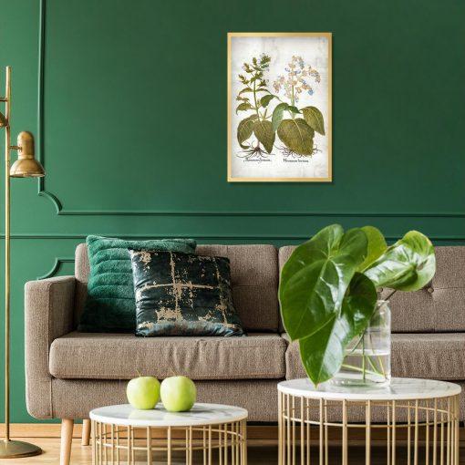 Plakat zielarski - Szałwia trójbarwna do salonu