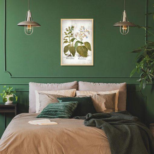 Plakat zielarski - Szałwia trójbarwna do sypialni