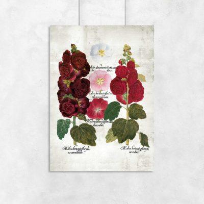 Plakaty gatunki malwy ogrodowej