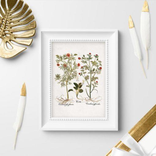 Plakaty z roślinami zielnymi