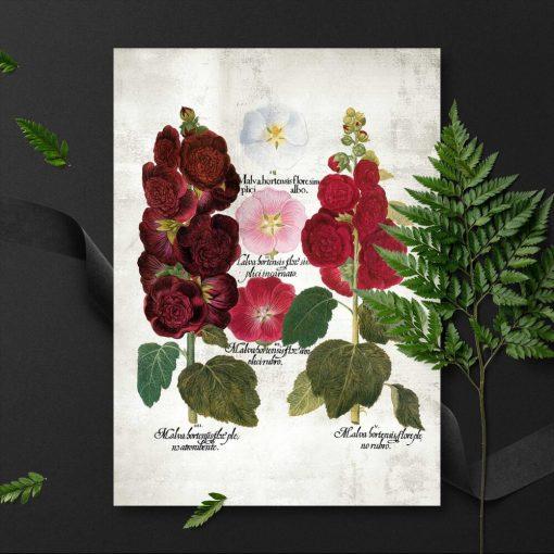 Plakaty z wariantami kwiatów ogrodowych