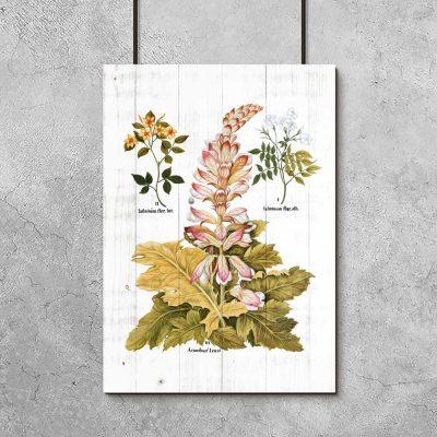 Rustykalny plakat z motywem botanicznym